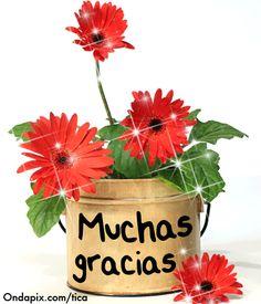 Muchas Gracias Thank You Greetings, Birthday Greetings, Thank You Cards, Good Day Wishes, Happy Wishes, Good Morning Texts, Good Morning Greetings, Happy Birthday Candles, Happy Birthday Images