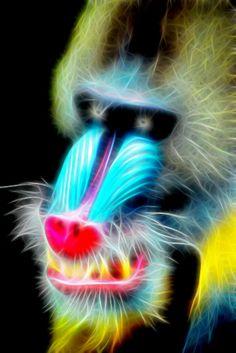 Baboon's Face by Bob Smerecki