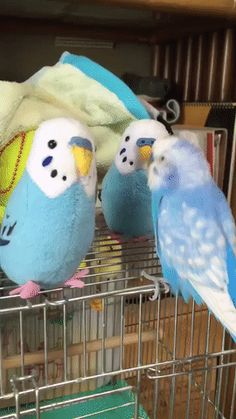 Things that make you go AWW! Like puppies, bunnies, babies, and so on. A place for really cute pictures and videos! Funny Birds, Cute Birds, Cute Funny Animals, Animal Pictures, Cute Pictures, Funny Parrots, Lovely Creatures, Meeting New Friends, Funny Animal Videos