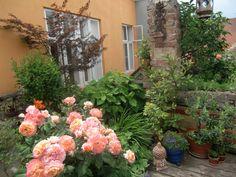 #rose #Back #Yard  #Patio #hiding_garden #secret_garden #vienna_roof_garden #vienna #Gartenspaß #spring work in progress Patio, Plants, Lawn And Garden, Pictures, Plant, Planets, Terrace