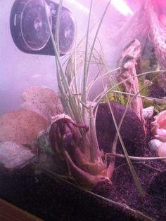 Plants for Hermit Crabs   The Happy Hermit Crab