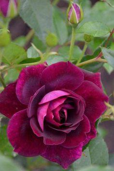 Flores a todo  color