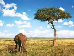 Travel to Africa and visit Kenya, where an Intrepid wildlife safari awaits. From Nairobi, head to Lakes Nakuru and Naivasha before traversing the epic Masai Mara.