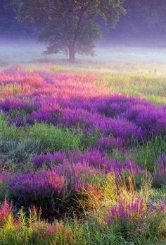 Purple sw*