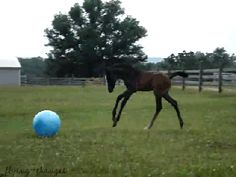 13 Adorable Foals Being Totally Adorable « HORSE NATION