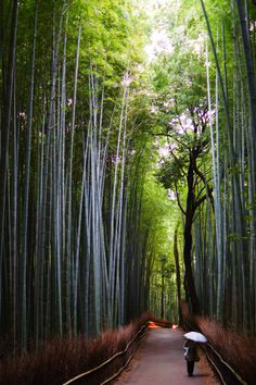 A raining day in Kyoto's bamboo groves