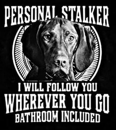 Viszla and Weimaraner rules! I Love Dogs, Puppy Love, Cute Dogs, Animals And Pets, Funny Animals, Cute Animals, Vizsla Puppies, Dogs And Puppies, Doggies