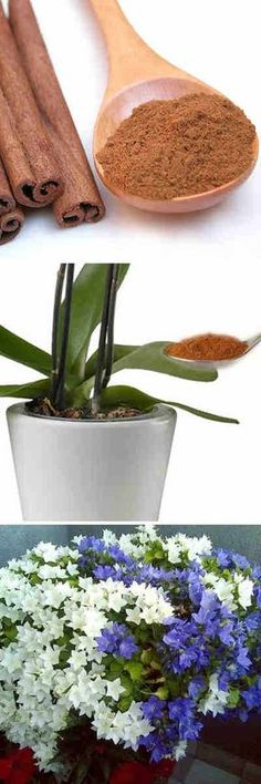 Echa un poco de canela a tus plantas en esta parte y será el inicio de una planta feliz