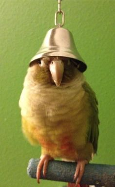 PetsLady's Pick: Funny Belled Bird Of The Day  ... see more at PetsLady.com ... The FUN site for Animal Lovers