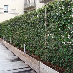 Impact Plants supplies living green screens, instant screens of ivy growing on wiremesh supplied. Living fence panels and hedging screens.