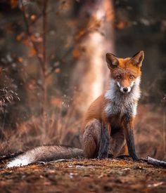 Forest Animals Wildlife Photography by Ossi Saarinen Photographer Ossi Saarinen captures the many wild forest animals living in Finland's mystical woodlands. Wild Forest, Forest Fairy, Beautiful Creatures, Animals Beautiful, Animals And Pets, Cute Animals, Lightroom, Photoshop, Real Life Fairies