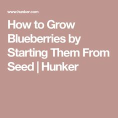 How to Grow Blueberries by Starting Them From Seed | Hunker
