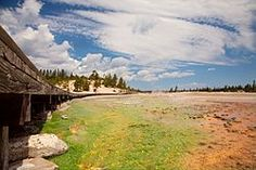 温泉藻 - Wikipedia
