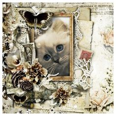My Enchanting StoryBook by Mo Credits materials . Studio Manu ©Photo 'Quinn Fay' by Cattery da MaKaJa All Ri. Cattery, Photo S, Journey, Passion, Studio, Cats, Gatos, The Journey, Studios