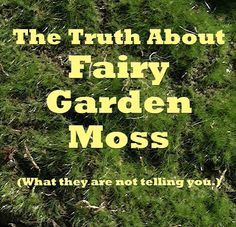 Miniature Fairy Gardening : What They Won't Tell You But I Will