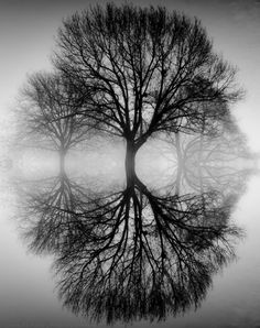 Black and white photograph    trees