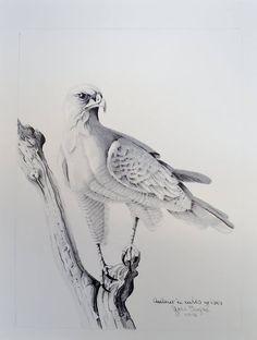 Dessin à la mine de plomb Owl, Bird, Animals, Drawings, Animales, Animaux, Owls, Birds, Animal