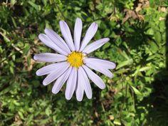 Flower, my garden, Burrawang Cottage, Places, Garden, Flowers, Photos, Ideas, Garten, Pictures, Cottages