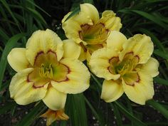 Daylily Patchwork Puzzle