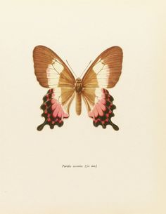Vintage Butterfly Print, Farmhouse Chic, Pink Swallowtail, 1960s Book Plate To Frame (No. 32-1). via Etsy.
