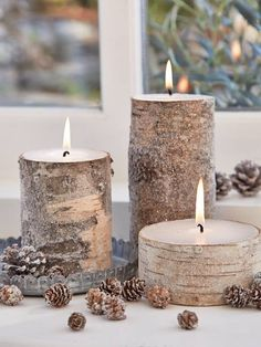 Bark Candles