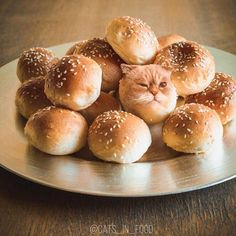 Cats Photoshopped Into Food Are So Cute You Could Just Eat Them Up Funny cat photos in food by Ksenia Related posts:Funny Cats Pet Cute Cartoon Wall Art Decal Sticker Removable Vinyl Cut Transfer. Funny Animal Jokes, Funny Cute Cats, Funny Cats And Dogs, Cute Cat Gif, Funny Cat Memes, Funny Cat Videos, Cute Funny Animals, Dumb Cats, Funny Cat Photos