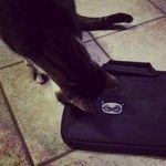 Photo by Manon - Grumpy Cat - http://www.bernardforever.fr/products/grumpy-cat