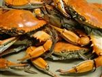 Maryland Steamed Crabs | Jumbo Bluecrabs | Buy Online | Shipped Mail Order