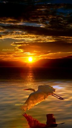 Cool Pictures, Cool Photos, Beautiful Pictures, Beautiful Sunset, Beautiful Birds, Night Sights, Dusk To Dawn, All Nature, Sky And Clouds