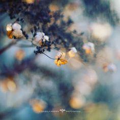 sleepless - moon shadow between you and me      schlaflos -  Mondschatten  zwischen dir und mir      veredit©isabella.kramer17