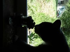 My cat was sniffing my flowers and i caught a picture at the best momment possible