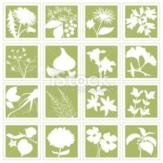 Herbal Plants Silhouettes Set D - N Royalty Free Stock Vector Art Illustration