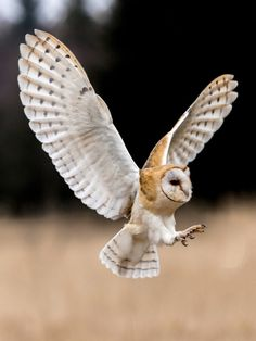 Look at those wings! Owl