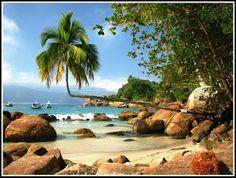 Aventureiro, de Ilha Grande - Río de Janeiro, Brasil Me encanta esta palmera!