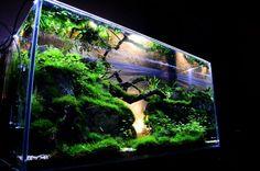 For many fish tank hobbyists, aquascaping or aquarium aquascape design can be…
