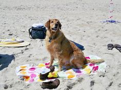 Holli loved the beach at Rodanthe. www.midgettrealty.com