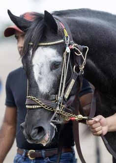 Trainer Ian Wilkes has another promising 3-year-old on his hands this season in Gotta Go, a son of Shanghai Bobby, who became a stakes winner at 2 when capturing the Street Sense at Churchill Downs on Oct. 29.