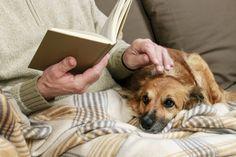 10 cosas que tu perro quiere que sepas - Mis animales