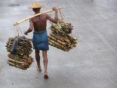 Bangladeshi forest worker  Photo by Melanie Pratt