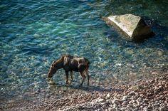 Moose Spotting at Keltic Lodge Cape Breton Resort