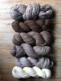 La nouvelle production des laines du Marquenterre. Un mélange de laine de moutons Shetland et  Hampshire élevés au Haras Henson de Rue (80120). En vente exclusive au Haras Henson
