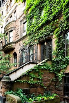 really cool ivy covered apartment building