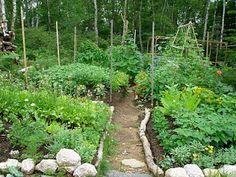 Lush veg garden