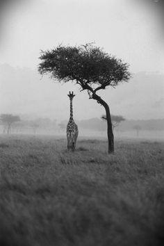 giraffe - inspiring picture on Joyzz.com