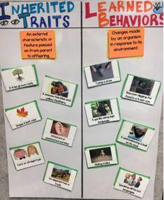 5th Grade Activities, Third Grade Science, Social Studies Activities, Teaching Science, Science Education, Life Science, Weird Science, Science Fun, Science Resources