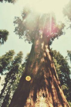 Sequoia National Park, California. @leadingwineriesofNapa. lwnapa.com