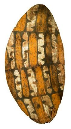 .Rain forest shield - Far North Queensland (?)