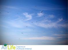 #airlife #aire #previsión #virus #hongos #bacterias #esporas #purificación purificación de aire Airlife te dice. ¿cuáles son las substancias mas importantes para la vida del hombre? el aire Junto con el agua es una de las substancias mas importantes para la vida de los humanos. Requerimos el oxigeno. Y que este limpio el aire…