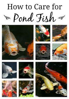 Sunny Floating Feeding Ring For Koi Goldfish And All Pond Fish Fish & Aquariums