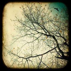 Life around the Tree